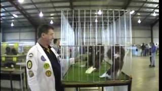 Australian National Pigeon Association. National Show 2006/2.Vid- Ray Mathiesen