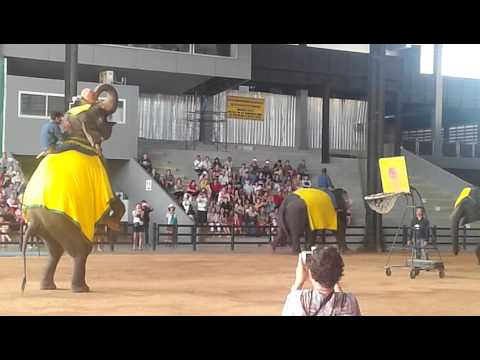 zoo of Thailand, ដំរីបោះបាល់(Elephants play basketball in zoo of Thailand)