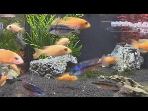 Аквариумные КРЕВЕТКИ  VS аквариумные  РЫБКИ