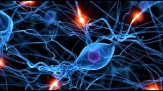 Potenziamento della Memoria (Memory Learning)