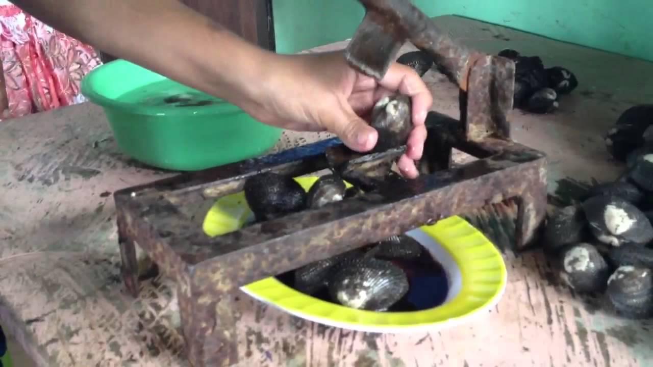 Destapar conchas doovi for Como cocinar conchas finas