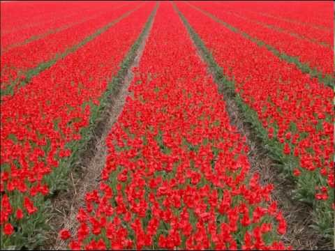 Bossa Nova - 2013 New Beautiful Love Song - Catalan Flower (Englantina) by Radio Salamandra