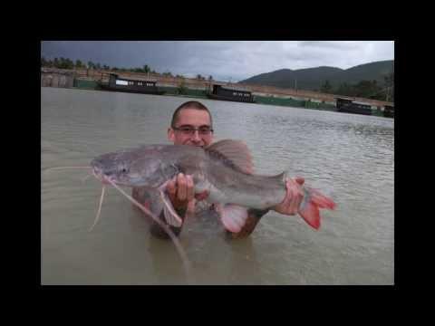 Topcats Fishing - Asian Redtail Catfish - Koh Samui - Thailand