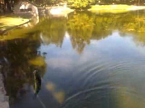 Fishing at irvine regional lake youtube for Irvine lake fishing