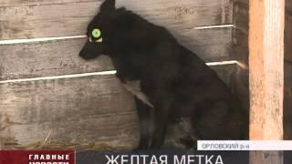 В Орле появились собаки с желтыми бирками