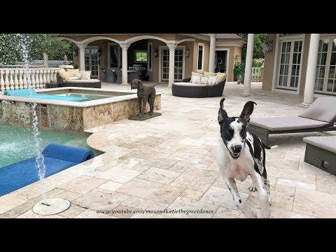 Great Dane Has Fun Running Through Pool Water Jets