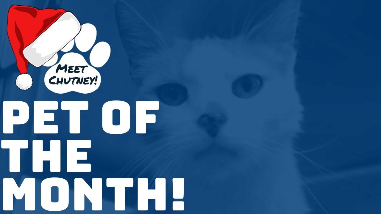 December Pet of the Month: Meet Chutney!