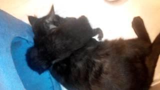 Новорожденным котятам снится сон)