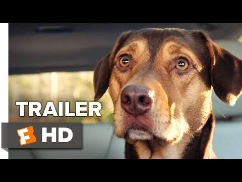 A Dog's Way Home International Trailer #1 (2019) | Movieclips Trailers