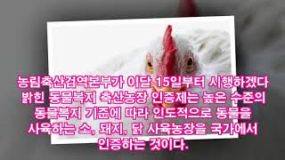 """""""닭이 건강해야 우리의 '밥상'이 건강해진다"""""""
