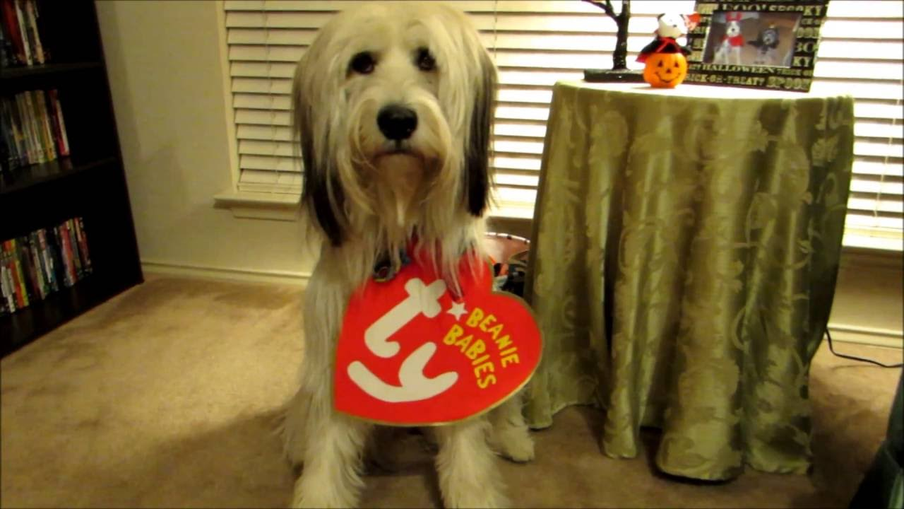 b6399d7fae5 DIY Pet Halloween Costume - TY Beanie Babies - YouTube