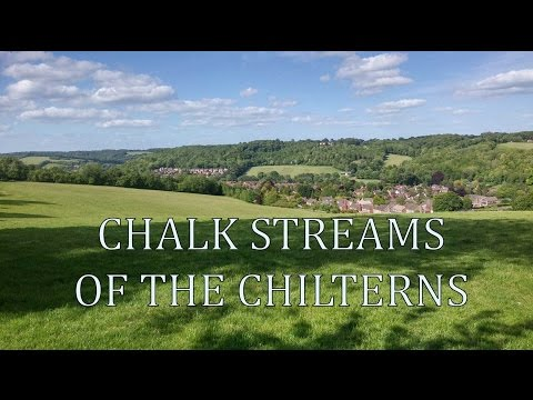Chalk Streams of the Chilterns