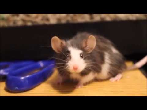 Jumpy Mouse, Old Mouse, and a Sleepy Hamster! - YouTube