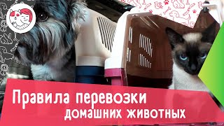 4 правила перевозки домашних животных