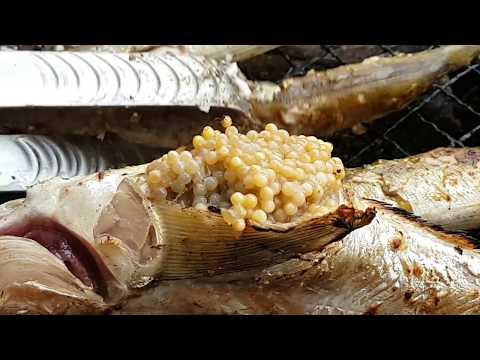 길거리음식:속초 양미리축제 | 양미리 도루묵구이 |  Korean Sokcho sea food