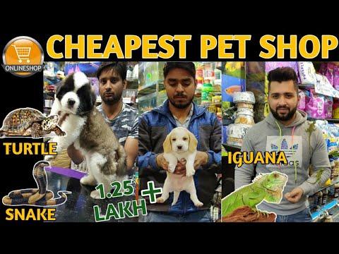 Cheapest Dog & Pet Shop||Buy Pets Online|| Vikas Pet Shop||Dogs,Cats,Iguana,Snake