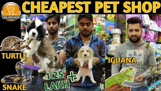 Cheapest Dog & Pet Shop||Buy Pets Online|| Vikas Pet Shop||Dogs,Cats,Iguana,Snake