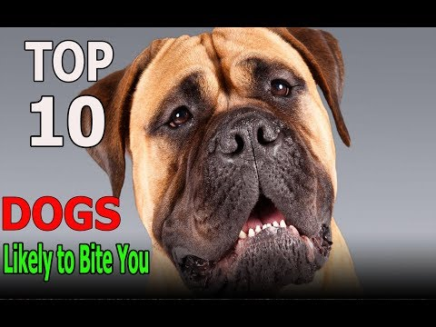 Top 10 Dog Breeds Most Likely to Bite You | Top 10 animals