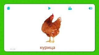 Курица - Карточки Для Детей - Домашние Животные - Карточки Домана