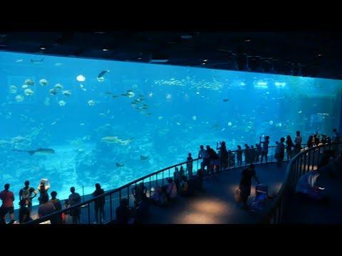 Singapore S.E.A. Aquarium.World's largest single viewing panel.Big Fish Tank in Aquarium