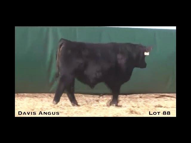 Davis Angus Lot 88