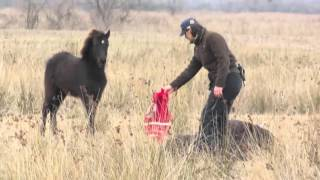 FOUR PAWS heroes: How a wild horse thanks its savior thumbnail