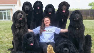 10 Questions with a Newfoundland Dog Owner