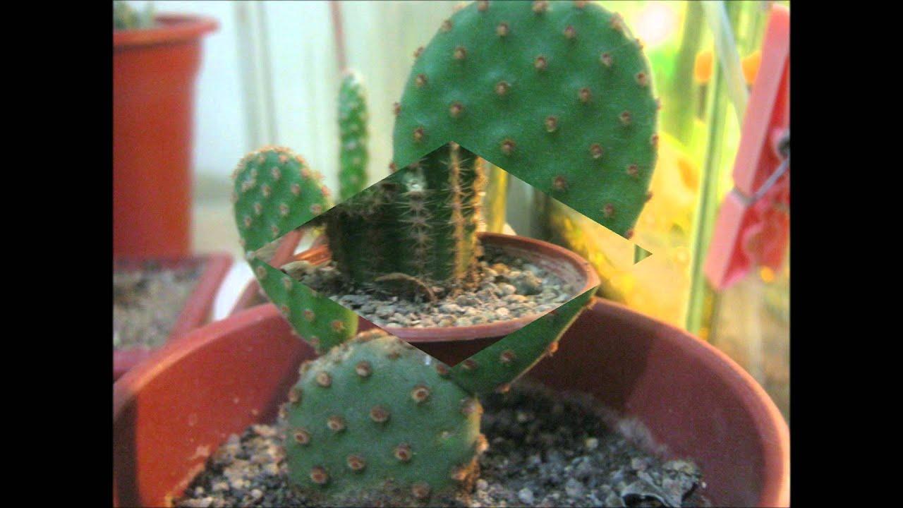 cactus y suculentas con sus nombres 2012  FunnyCatTV