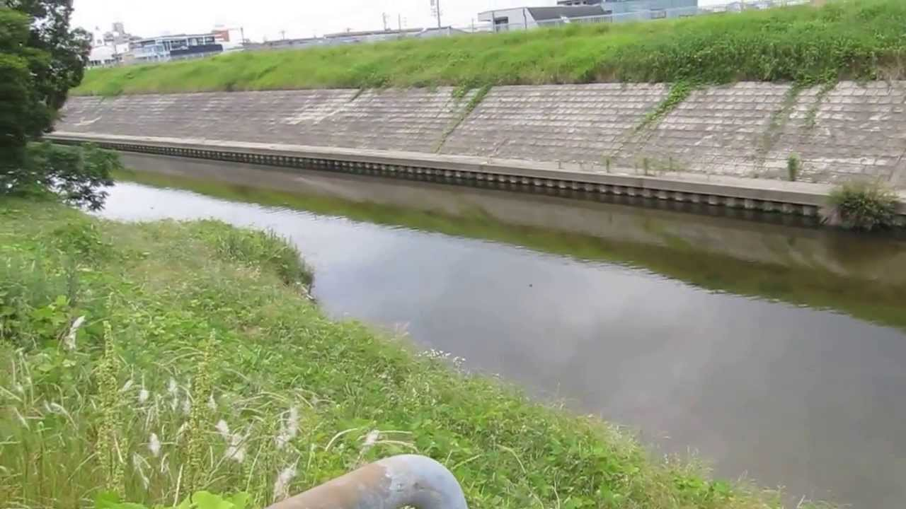 植田川 排水口の下流 名古屋市天...