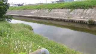 植田川 排水口の下流 名古屋市天白区 魚釣りポイント 釣り