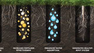 The Differences Between Aeration Tines