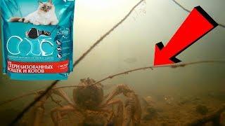 Реакция рыбы на КОШАЧИЙ КОРМ! Подводная съемка