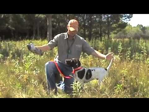 Best hunting dog training videos