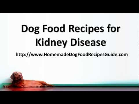 Dog Food Recipes For Kidney Disease