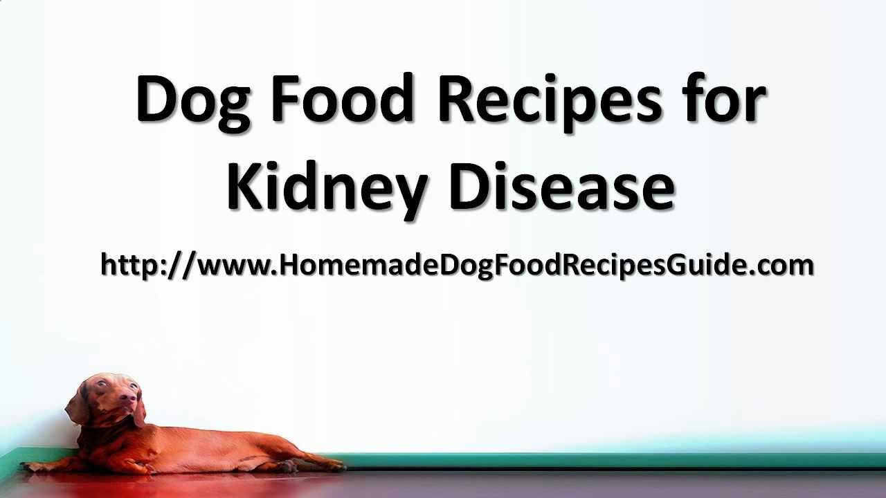Dog food recipes for kidney disease youtube forumfinder Image collections