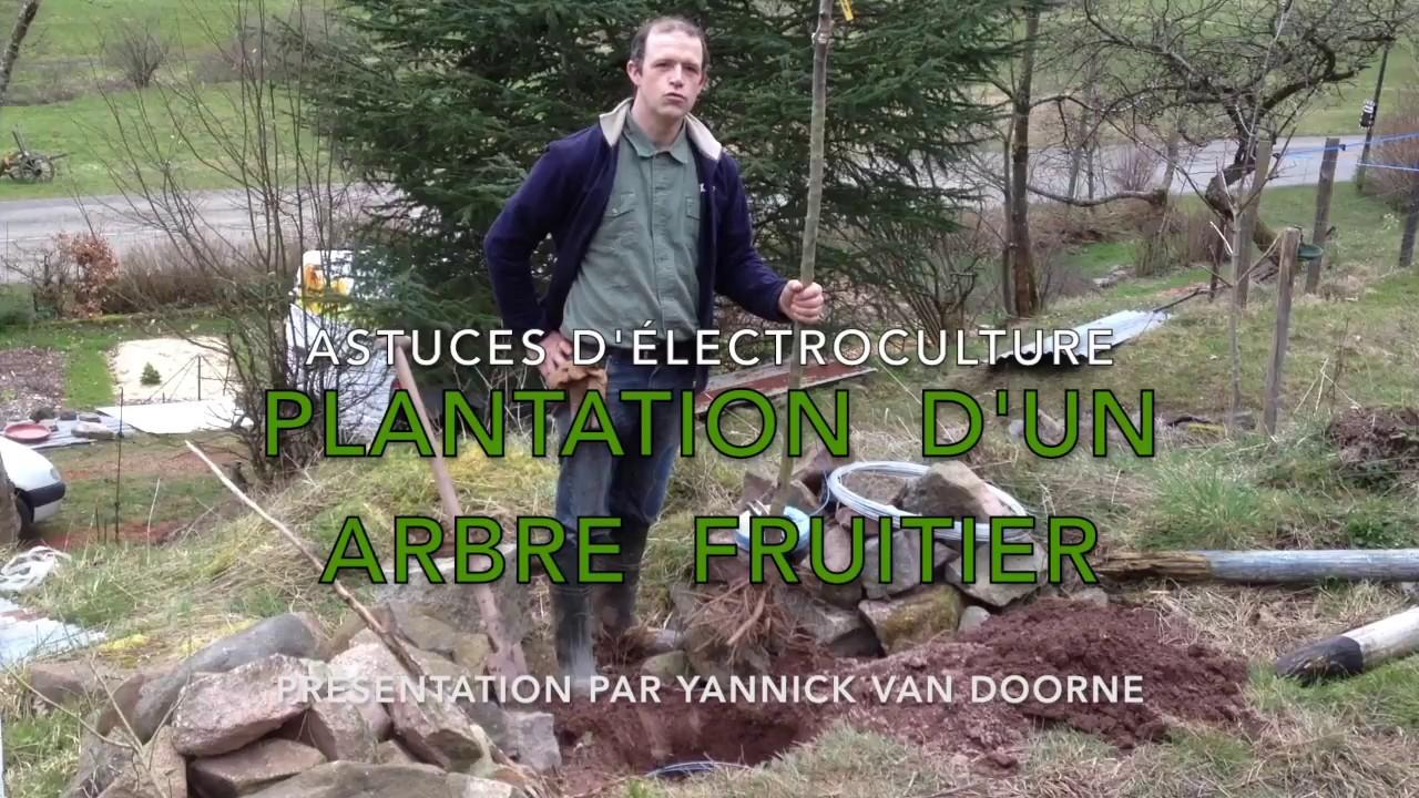 Electroculture astuces plantation d 39 un arbre fruitier - Plantation d un fruitier ...