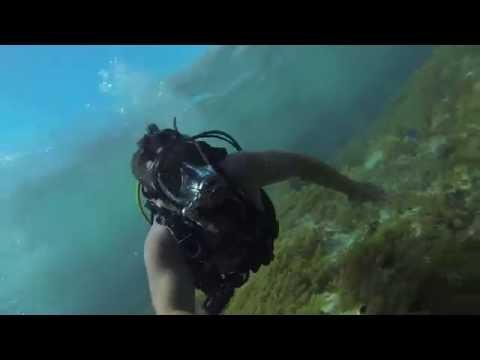Shark Feeding - Blackbeard Cruises- Bahamas 06/18/16
