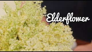 Home-made Elderflower Cordial - Crumbs