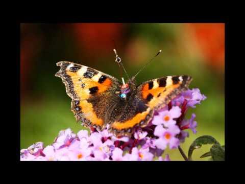 Joop Visser -  Een nieuwe lente
