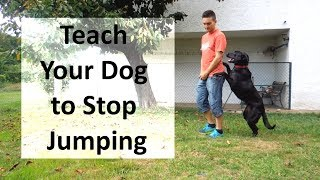 How To Train Your Dog To Stop Jumping Up On People