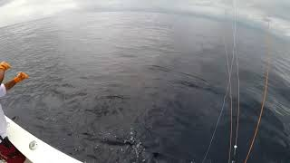 2018 Offshore World Championship | 2011 Offshore World Championship | Pacific Sailfish