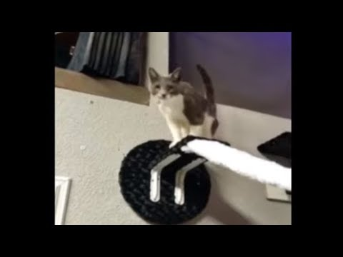 Parkour cats jump and play in coolest cat room ever