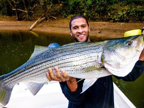 Allatoona striper fishing go pro hero 3 vid pics youtube for Allatoona fishing report