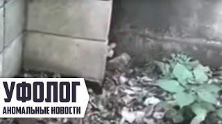 НАСТОЯЩИЙ ЭЛЬФ (гном) ПОПАЛСЯ на видеокамеру / СТРАШНОЕ ВИДЕО [ЧУДОВИЩЕ ИЛИ ГУМАНОИД] ужас