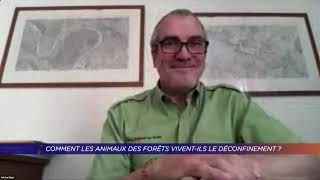 Yvelines | Comment les animaux des forêts vivent-ils le déconfinement ?