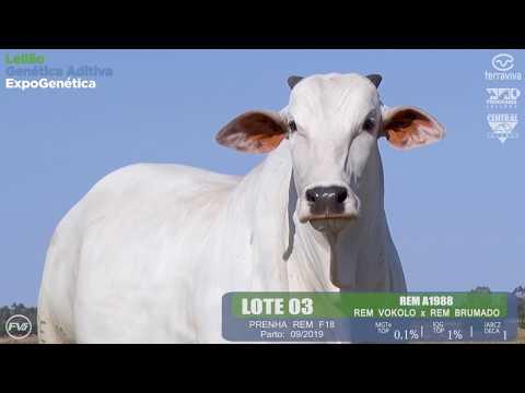 LOTE 03 - Leilão Genética Aditiva ExpoGenética 2019