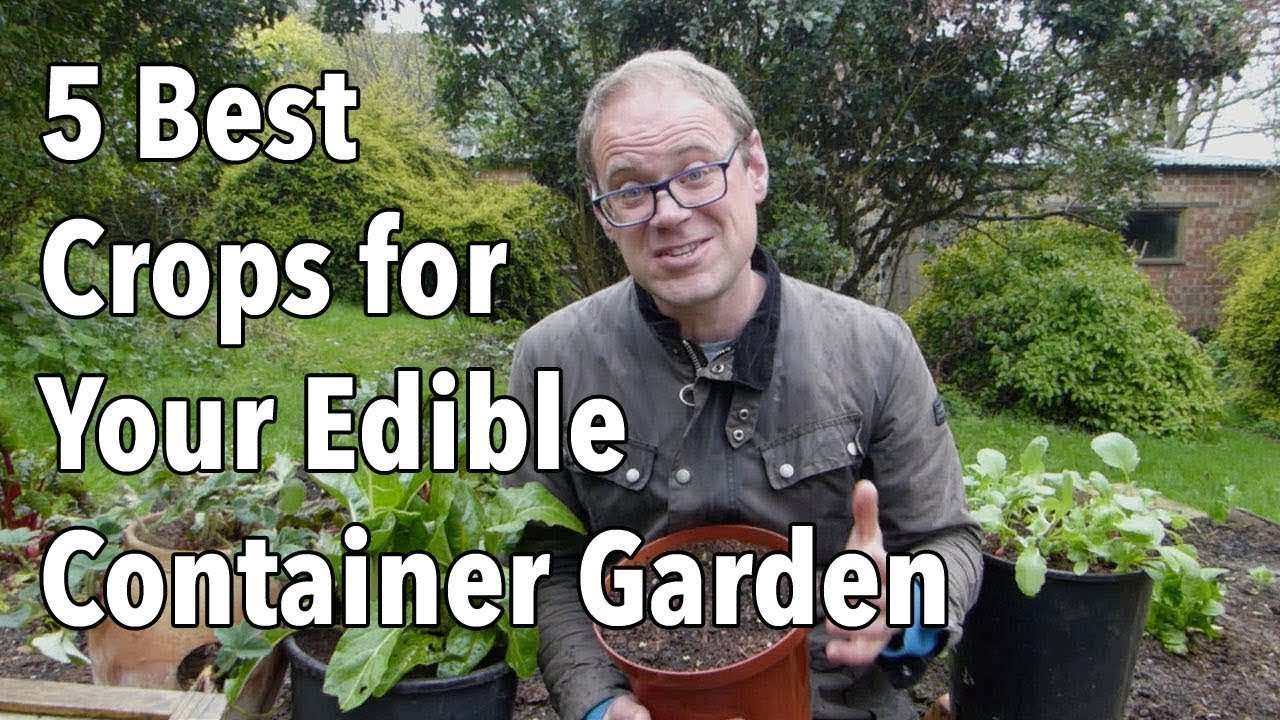 5 Best Crops For Your Edible Container Garden You