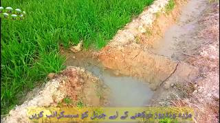 Tubewell Water||In Our Village||Punjab Pakistan