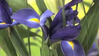 Florists Rosny Park Venus Tas