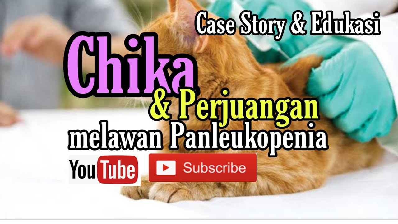 Case Story, Perjuangan Chika Melawan Virus Panleukopenia - YouTube